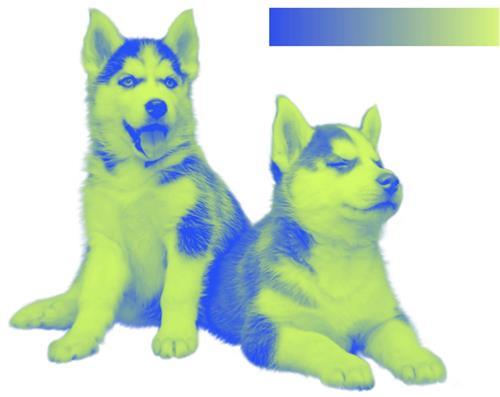 设计配色中的美颜滤镜——双色调